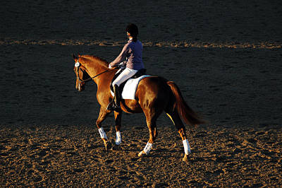 Hanovarian Dressage Horse Photograph - Untitled by Kelly Wright