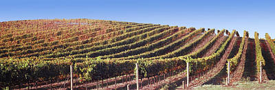 Napa Valley Photograph - Vineyard, Napa Valley, California, Usa by Panoramic Images