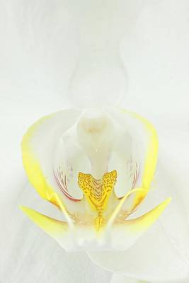 Phalaenopsis Photograph - White Orchid-3 by Rudy Umans