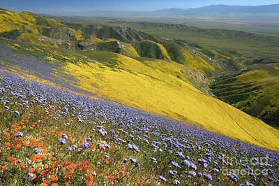 Photograph - Wildflowers In California by Bob Gibbons