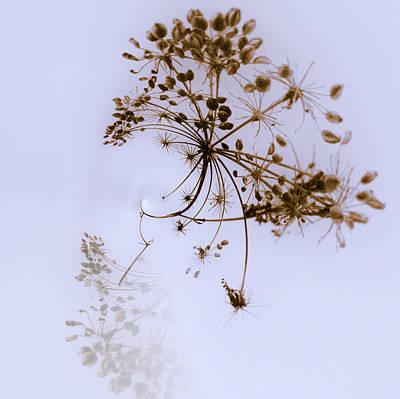 Jouko Lehto Royalty-Free and Rights-Managed Images - Winter by Jouko Lehto