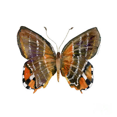 Animals Paintings - 60 Euselasia Butterfly by Amy Kirkpatrick