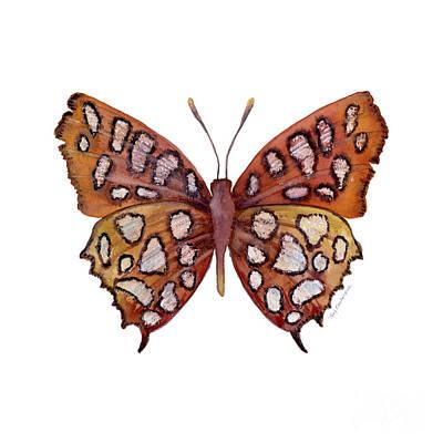 61 Hutchinson's Highflier Butterfly Original by Amy Kirkpatrick