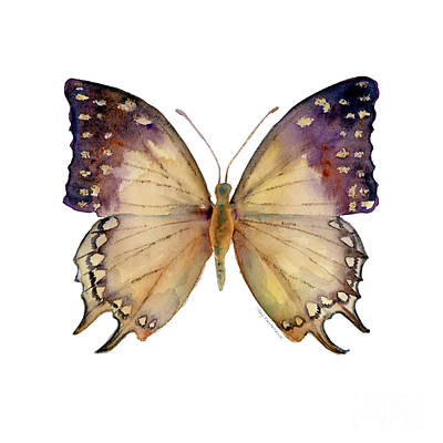 On-white Painting - 63 Great Nawab Butterfly by Amy Kirkpatrick
