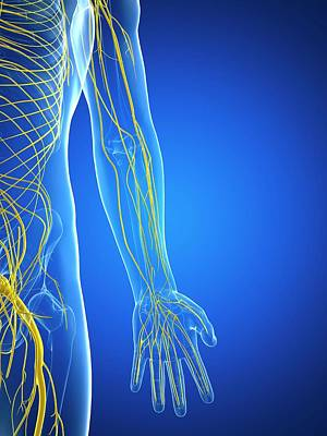 Nervous System Art Print by Sciepro/science Photo Library