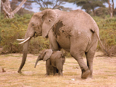 Photograph - 6321 Elephant Mother And Baby by Chris Maher