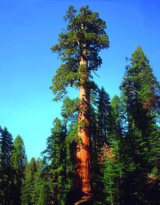 Abundance Photograph - Usa, California, Sierra Nevada Mountains by Jaynes Gallery