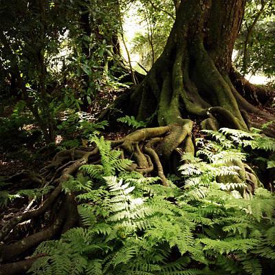 Jungle Beauty Photograph - Jungle by Les Cunliffe