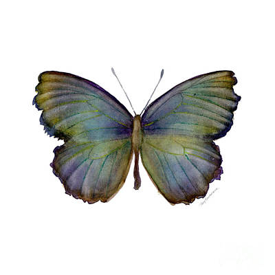 On-white Painting - 65 Moonglow Butterfly by Amy Kirkpatrick