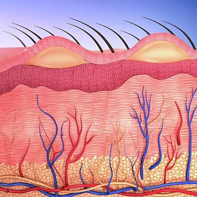 Human Skin Art Print