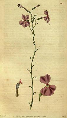 Botanical Print By Sir William Jackson Hooker Art Print by Quint Lox