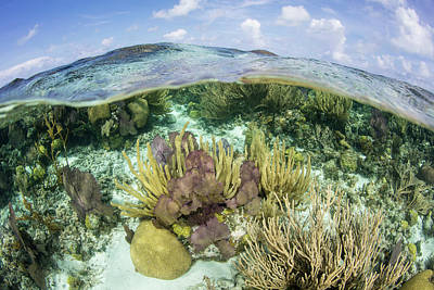 Photograph - A Split Level View Of A Coral Reef by Ethan Daniels