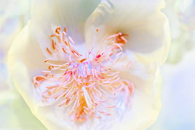 Photograph - Abstract Flower by Ulrich Schade