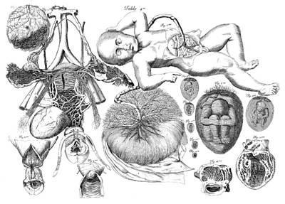 Photograph - Am� Bourdon, Nouvelles Tables by Science Source