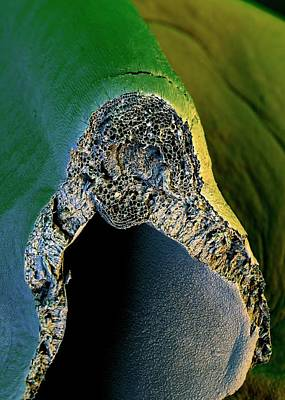 Broccoli Photograph - Broccoli by Stefan Diller