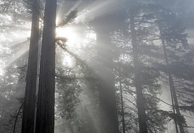 Sun And Tree Photograph - California, Del Norte Coast Redwoods by Jamie and Judy Wild