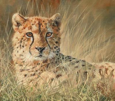 Wildlife Art Painting - Cheetah by David Stribbling