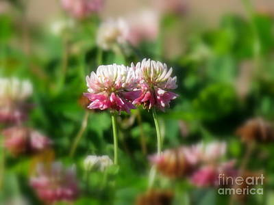 Photograph - Clover Field by France Laliberte