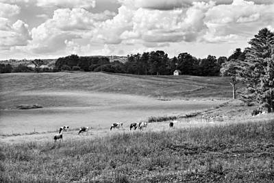 Holstien Photograph - Cows Grazing On Grass In Farm Field Summer Maine by Keith Webber Jr