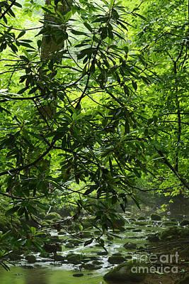 Garden Fruits - Cranberry Wilderness by Thomas R Fletcher