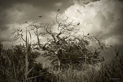 Artistic License Digital Art - 7 Crows by Brian Wallace