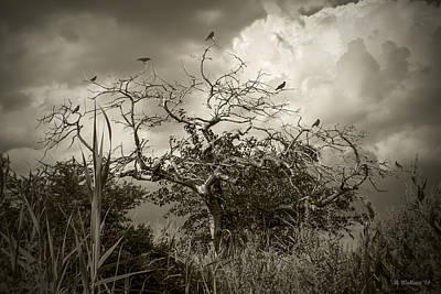 7 Crows Art Print