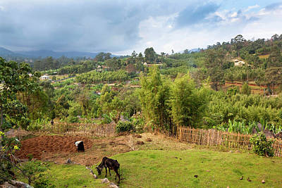 Dorze In The Guge Mountains, Ethiopia Art Print by Martin Zwick