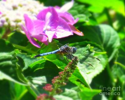 Insects Photograph - Dragonfly Blue Dasher by Scott Cameron