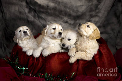 Festive Puppies Art Print by Angel  Tarantella