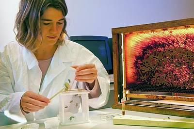 Honey Bee Pesticide Research Art Print