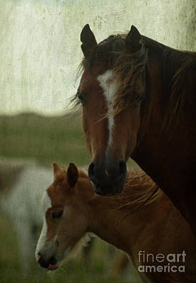 Horses Art Print by Angel Ciesniarska