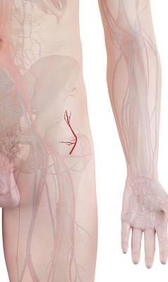 Human Artery Art Print by Sciepro