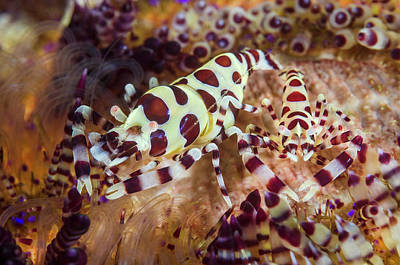 Indonesia, Lembeh Strait Art Print by Jaynes Gallery