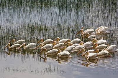 Kenya, Lake Nakuru National Park Art Print by Jaynes Gallery