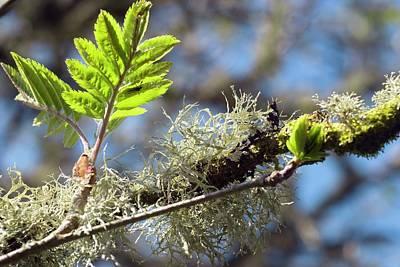 Exmoor Photograph - Lichen by David Aubrey
