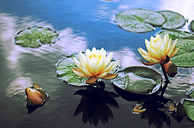 Evening Digital Art - Lily Pond by Jessica Jenney