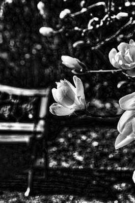 Photograph - Waiting For A Friend - Black And White by Marilyn Wilson