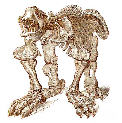 Ground Sloth Photograph - Megatherium, Cenozoic Mammal by Science Source