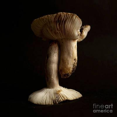Food And Drink Photograph - Mushrooms by Bernard Jaubert