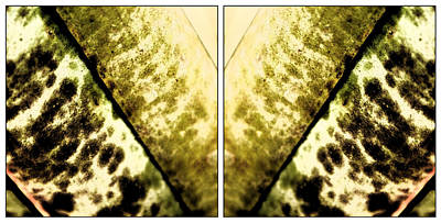 Nature Mirrors Art Print by Marcelo Del Rei