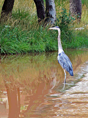 Photograph - Blue Heron On The East Verde River by Matalyn Gardner