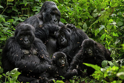 Photograph - Oil Exploratin Threatens Virunga by Brent Stirton