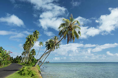 Photograph - Palm Trees On The Beach, Bora Bora by Panoramic Images