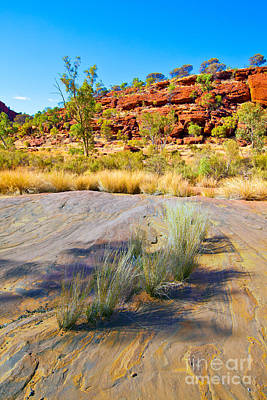 Fruits And Vegetables Still Life - Palm Valley Central Australia  by Bill  Robinson