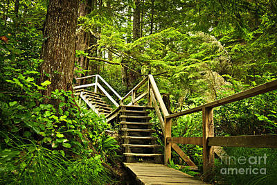 Photograph - Path In Temperate Rainforest by Elena Elisseeva