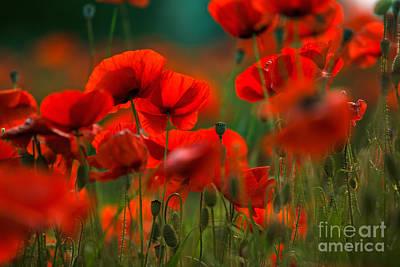 Group Photograph - Poppy Dream by Nailia Schwarz