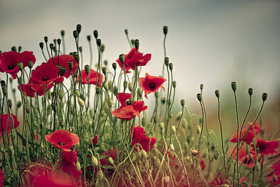 Red Flowers Photograph - Poppy Meadow by Nailia Schwarz