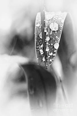 White Photograph - Raindrops On Grass  by Elena Elisseeva