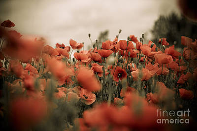 Artistic Photograph - Red Poppy Flowers by Nailia Schwarz