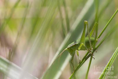 Fine Dining - Speckled bush-cricket Nymph by Jivko Nakev